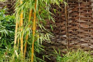 bamboo_plant_at_garden_198879_petr kratochvil